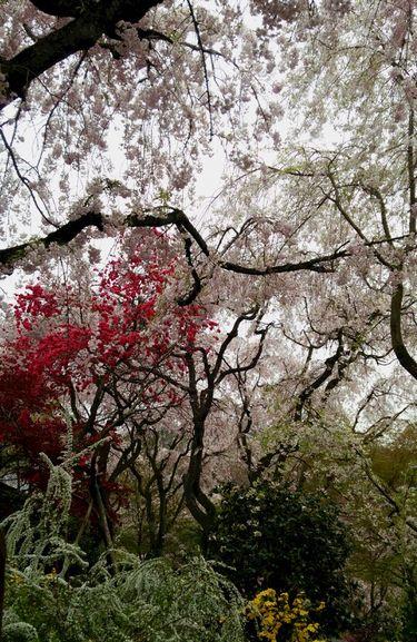 2014 お花見