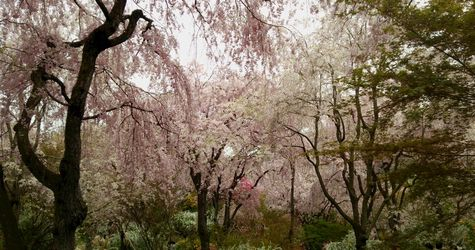 2014 お花見2