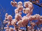 ashigara-20140321-04s.jpg