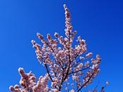 ashigara-20140321-15s.jpg