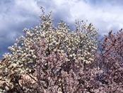 ashigara-20140321-16s.jpg