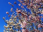 ashigara-20140321-17s.jpg