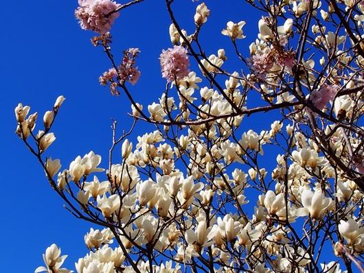 ashigara-20140321-18s.jpg