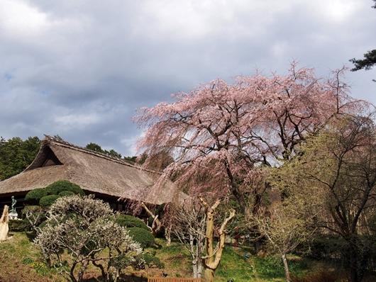 chichibu-20140405-02s.jpg