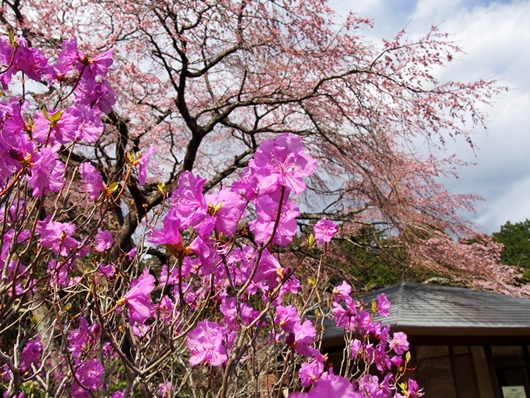 chichibu-20140405-06s.jpg