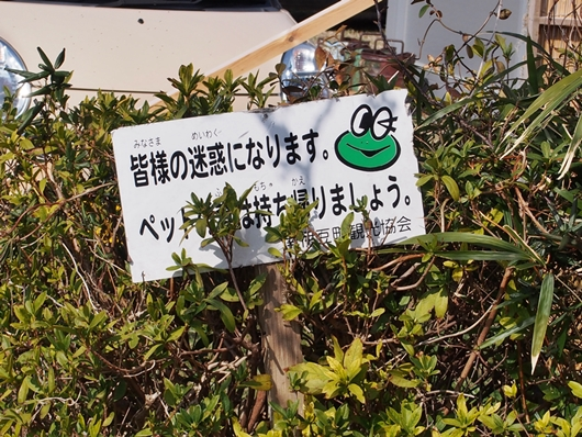kawazu-20140226-16s.jpg