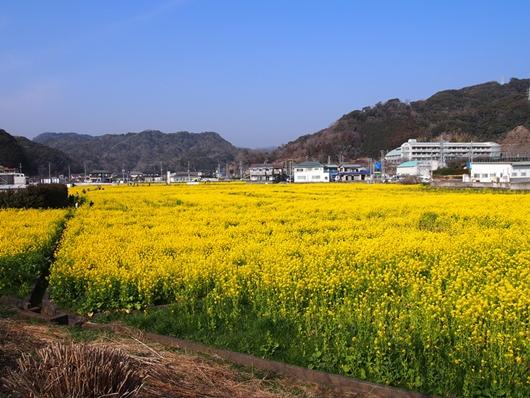 kawazu-20140226-24s.jpg