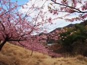 matukawa-20140315-04s.jpg
