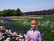 syoubu-20140601-04s.jpg
