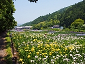 syoubu-20140601-09s.jpg