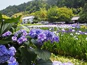 syoubu-20140601-10s.jpg