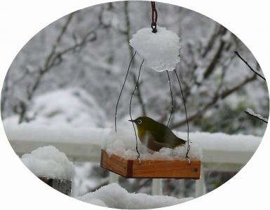 雪の中の訪問者メジロ