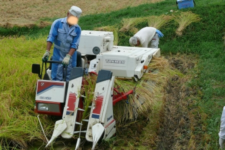 機械が稲を刈る・・(◎_◎)!!