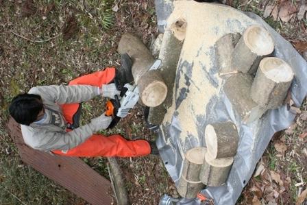 原木キノコ植菌6 木を切りまくる