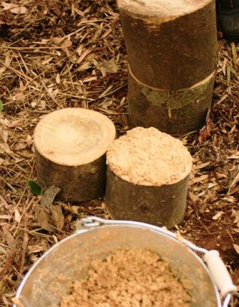 原木キノコ植菌9 木口に盛る