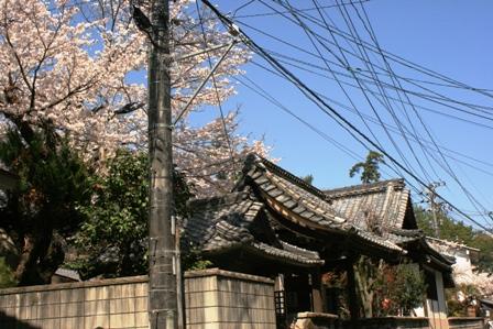 お寺と桜と電線