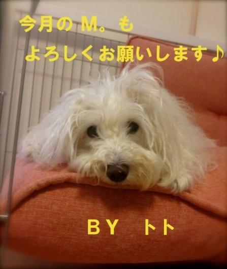 IMG_6896 のコピー