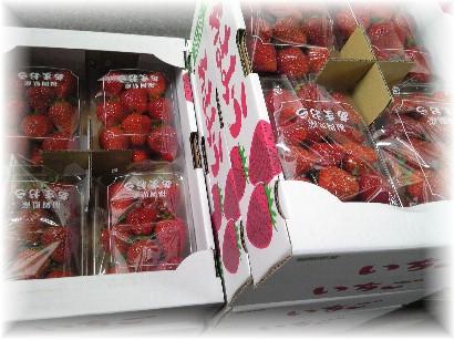 503苺-1