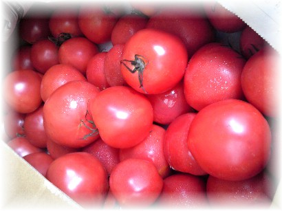 628バラトマト-1