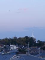 BL140220ベランダで夕暮れ1P1080161