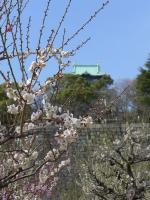 BL140308京橋までラン1P1080636