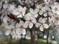 BL140324大阪城公園3P3240040