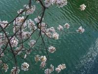 BL140405大阪城公園1P1100013