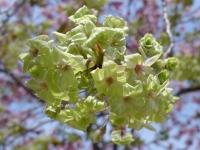 BL140411桜の通り抜け1P1100472