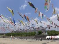 BL140502桜堤公園こいのぼり1P1110524