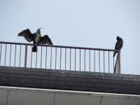BL140904打上公園の鳥1P9042054