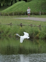 BL140904打上公園の鳥2P9042042