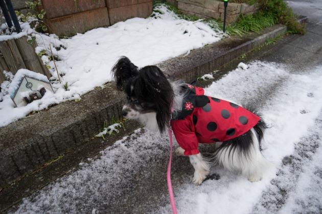 雪のバレンタインデー♪-002
