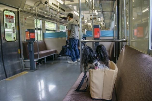 さよなら交通科学博物館(2) ~中学時代の可愛い散歩請負人も登場!~-013