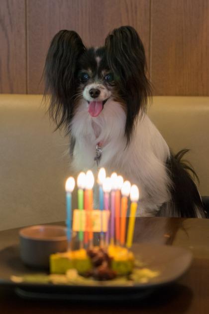 マリィ10歳のお誕生日♪-027