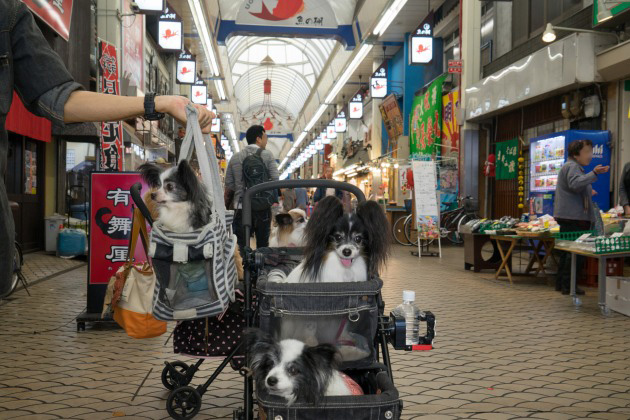 雨の日のお出かけ♪ ~明石・魚の棚商店街~-002