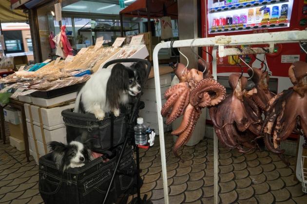 雨の日のお出かけ♪ ~明石・魚の棚商店街~-005