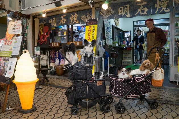 雨の日のお出かけ♪ ~明石・魚の棚商店街~-016