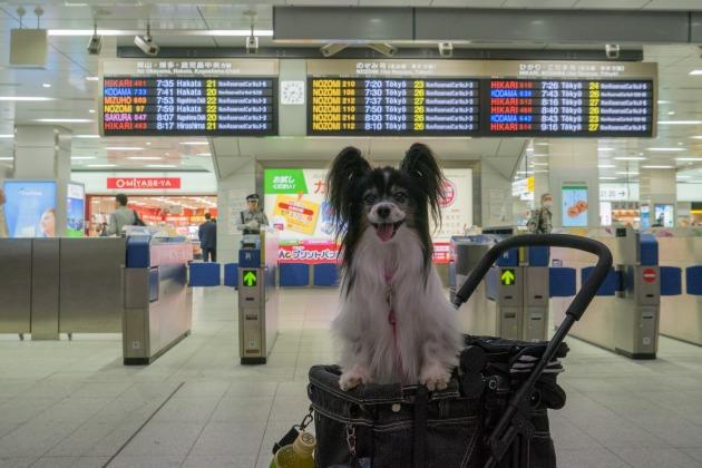 「熊猫犬オフ会」 厚かましい関西人の巻-001