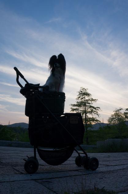 「熊猫犬オフ会」 オッサン乱入!+マザーカートの2本立て!!-011