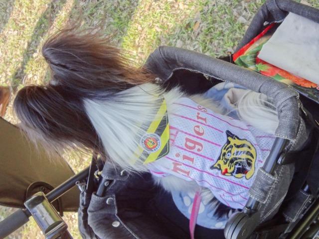 ドレスコードは阪神タイガース!!-006
