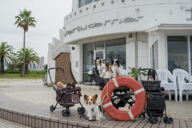 ステンドグラス贈呈オフ会♪ ~海辺のカフェ編~-015