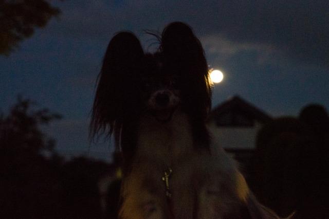 中秋の名月とマリィのコラボ-001