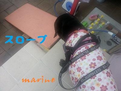 20140723marine2.jpg