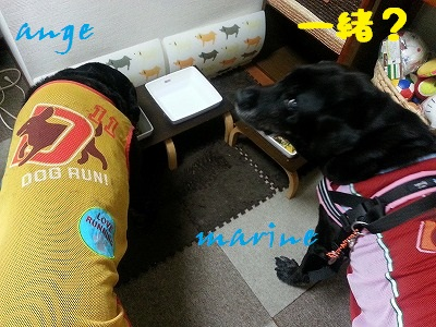 20140806marineange3.jpg