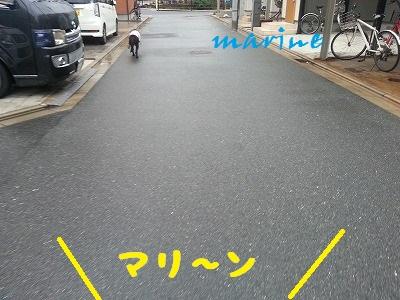 20140812marine2.jpg