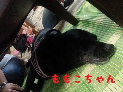 20140816_135709.jpg