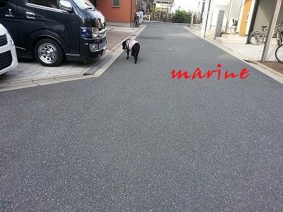 20140827marine1.jpg