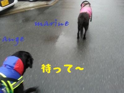 20140828marineange1.jpg