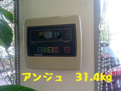 20140830ange2.jpg