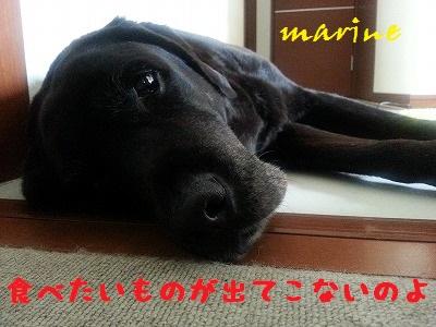 20140831marine10.jpg